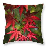 Red Leafs Of The Maple Throw Pillow