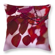Red Leaves - Euphorbia Cotinifolia - Tropical Smoke Bush Throw Pillow