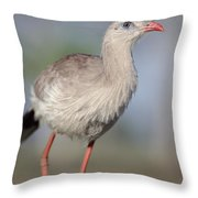 Red-legged Seriema Foraging  Pantanal Throw Pillow