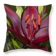 Red Lily 2 Throw Pillow