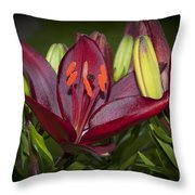 Red Lily 6 Throw Pillow