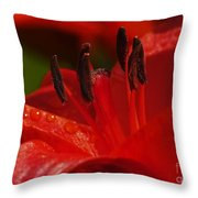 Red Lily Close Throw Pillow