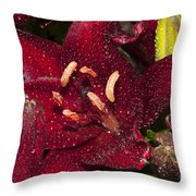 Red Lily Raindrops Throw Pillow