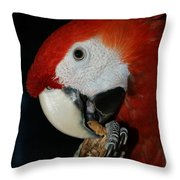 Red Macaw Throw Pillow