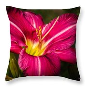 Red Magic Daylily Throw Pillow