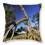Red Mangrove Aerial Roots Throw Pillow