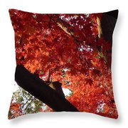 Red Maple 02 Throw Pillow