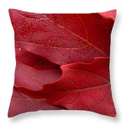 Red Maple Leaves Throw Pillow by Jennie Marie Schell