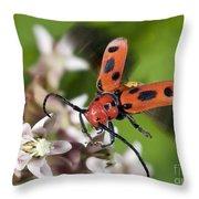 Red Milkweed Beetle Throw Pillow