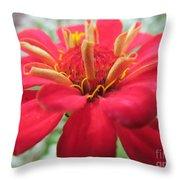 Red Mini-zinnia Throw Pillow