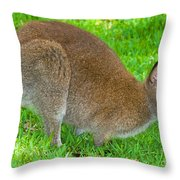 Red Necked Wallaby Throw Pillow