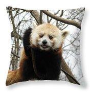 Red Panda Bear In A Tree Throw Pillow