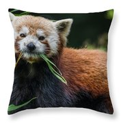 Red Panda With An Attitude Throw Pillow