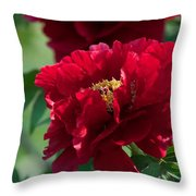 Red Party Throw Pillow