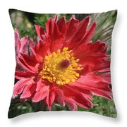 Red Pasque Flower Throw Pillow