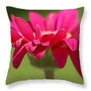Red Pink Daisy Throw Pillow