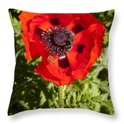Red Poppy And Bee Throw Pillow