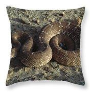 Red Rattlesnake Baja California Mexico Throw Pillow