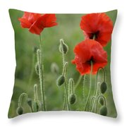 Red Red Poppies 1 Throw Pillow