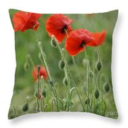 Red Red Poppies 2 Throw Pillow