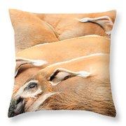 Red River Hogs Potamochoerus Porcus Throw Pillow