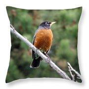 Red Robin II Throw Pillow
