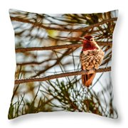 Red Rock Country Hummingbird Throw Pillow