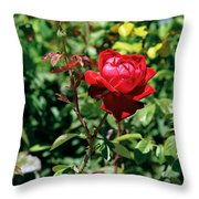 Red Rose. Throw Pillow