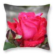 Red Rose And Dewtrops Throw Pillow