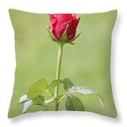 Red Rose Bud 1 Throw Pillow