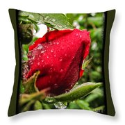 Red Rose Bud With Water Drops Throw Pillow