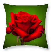 Red Rose Green Background Throw Pillow