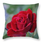 Red Rose Light Throw Pillow by Roger Snyder