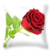Red Rose On White Throw Pillow