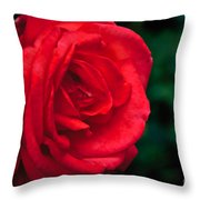 Red Rose Profile Throw Pillow