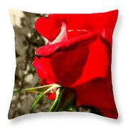 Red Rose #2 Throw Pillow
