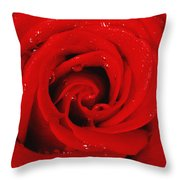 Red Rose With Water Drops Throw Pillow