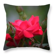 Red Rose 14-1 Throw Pillow