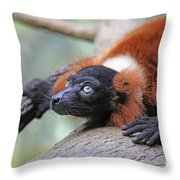 Red-ruffed Lemur Throw Pillow by Karol Livote