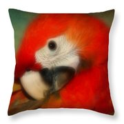 Red Scarlet   Macaw Parrot Sammy Throw Pillow