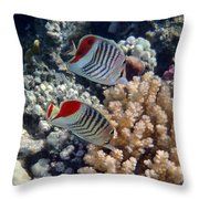 Red Sea Beauty 5 Throw Pillow