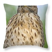 Red Shoulder Fledgling Throw Pillow