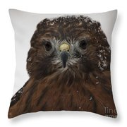 Red Shouldered Hawk Close Up Throw Pillow