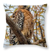 Red-shouldered Hawk In A Willow Tree Throw Pillow