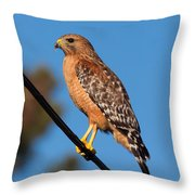 Red-shouldered Hawk On A Wire Throw Pillow