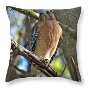Red-shouldered Hawk On Branch Throw Pillow