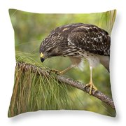 Red Shouldered Hawk Photo Throw Pillow