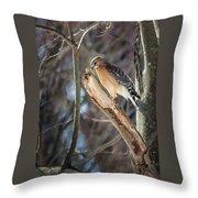 Red Shouldered Hawk Portrait Throw Pillow
