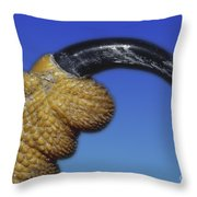 Red-shouldered Hawk Talon Throw Pillow