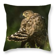Red-shouldered Hawk Wild Texas Throw Pillow